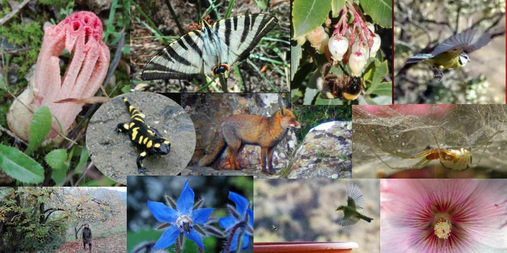 Refugios de Biodiversidad